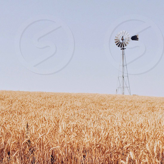 wind mill over yellow grass photo