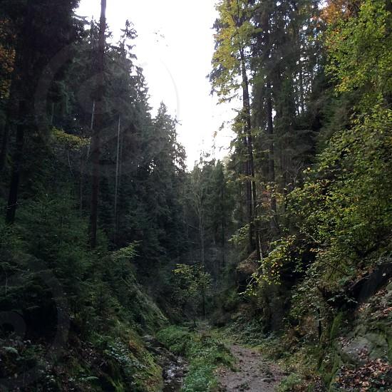 Elbsandsteingebirge  photo