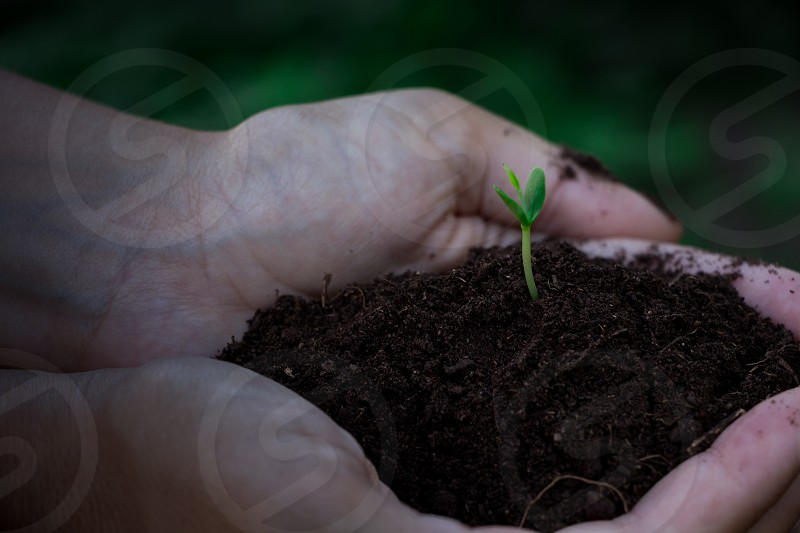 germination hands life nature seed plant agriculture new born green photo