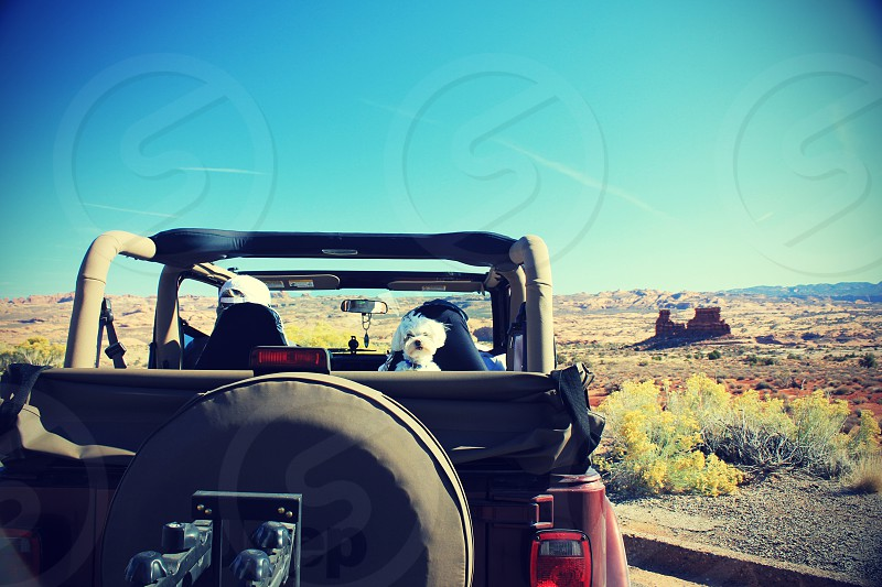 jeep and dog photo