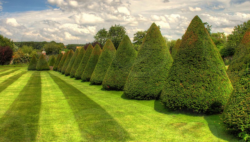 green cone shaped trees in green garden photo