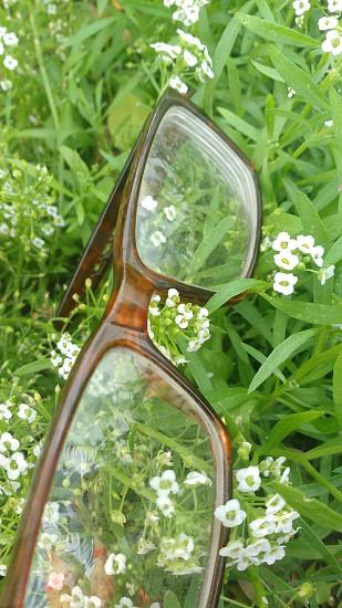 flowers specs photo