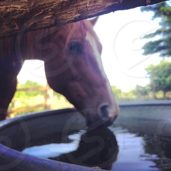 Horses water farm photo