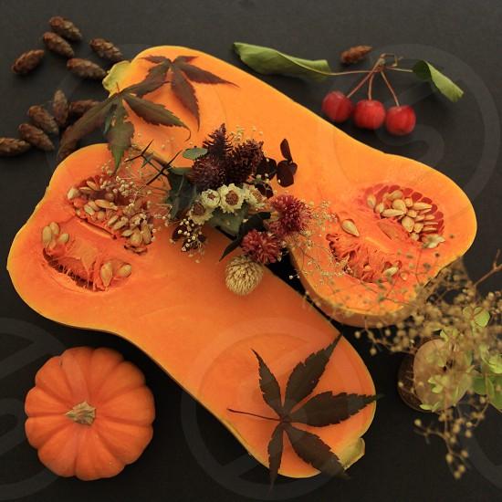 Thanksgiving pumpkin   photo