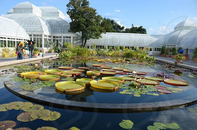round outdoor water feature with assorted round lily pads photo