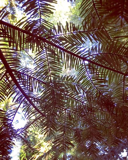 Nature's own kaleidoscope. photo