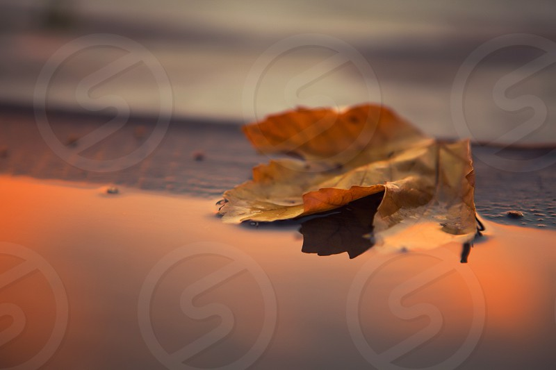 Leaf in orange water photo