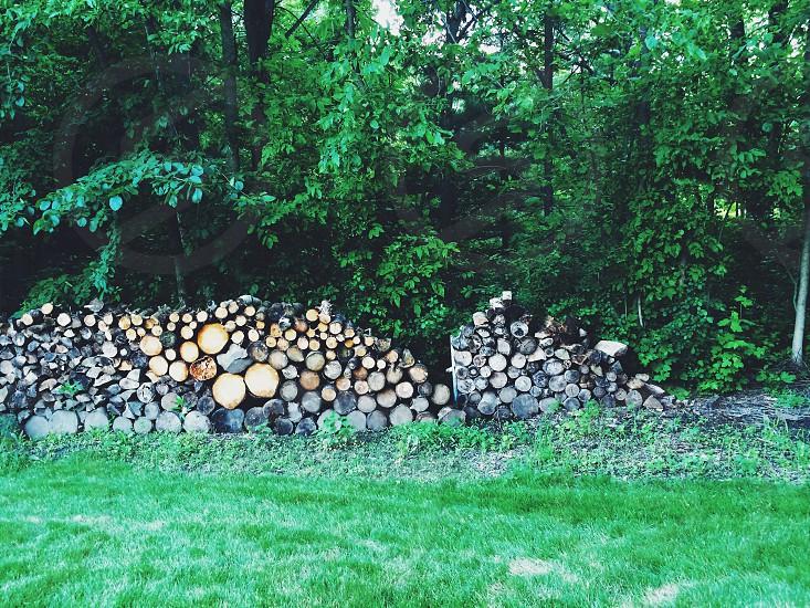 Back yard.  photo
