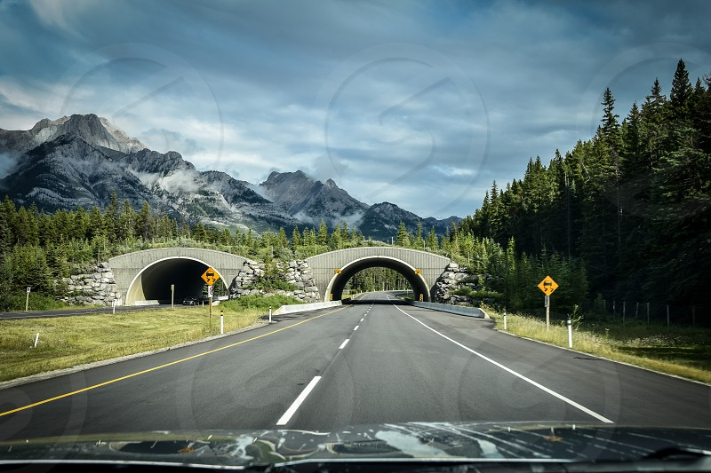 Not all bridges are for people. Driving down a Canadian road surrounded by mountains and trees.  photo