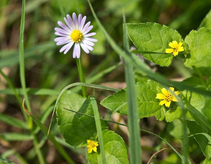 Flowers in a field.  photo