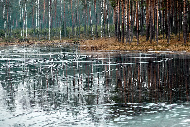 Ice patterns and tree reflections in the lake water photo