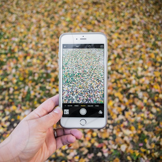 person holding silver iphone 6 capturing image of the flowers photo