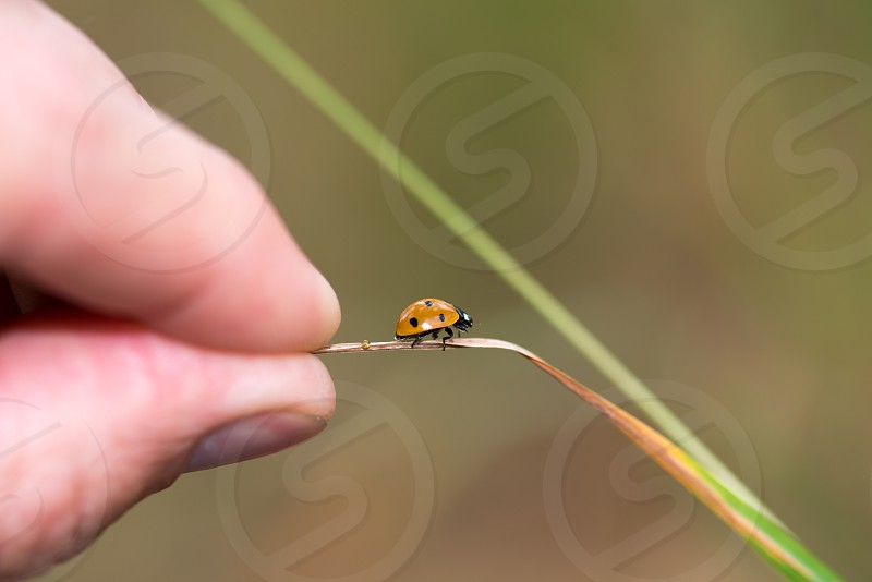 Holding on with ladybug photo