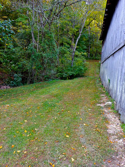 grass trail and trees by shed photo