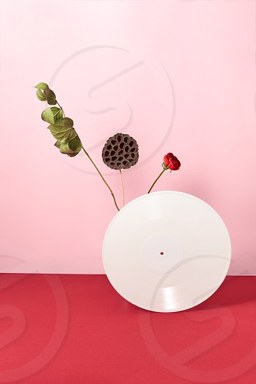 Vinyl white retro record decorated with dry branches and a red flower on a duotone rose red background with copy space photo