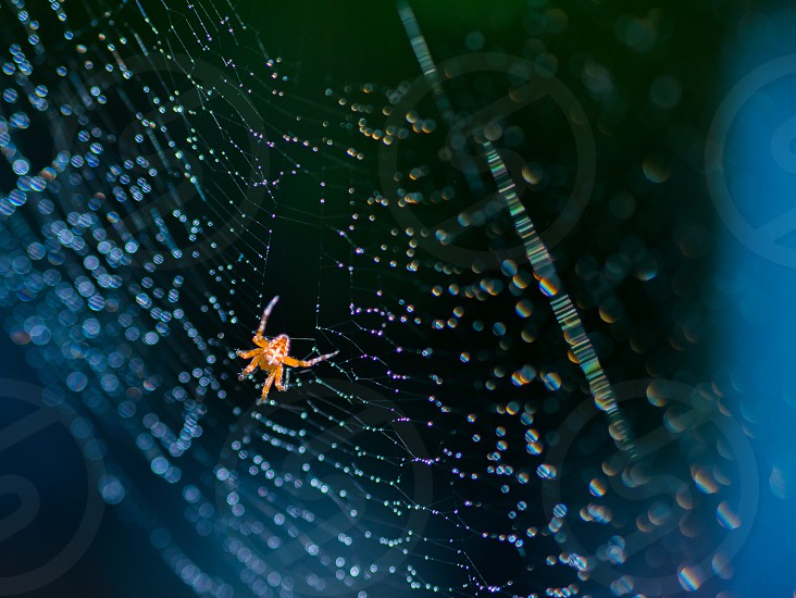 pretty scary frightening spider web for halloween at web with dew on blue background photo