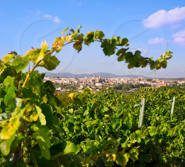Requena in Valencia province a wine region of Spain from vineyard view photo