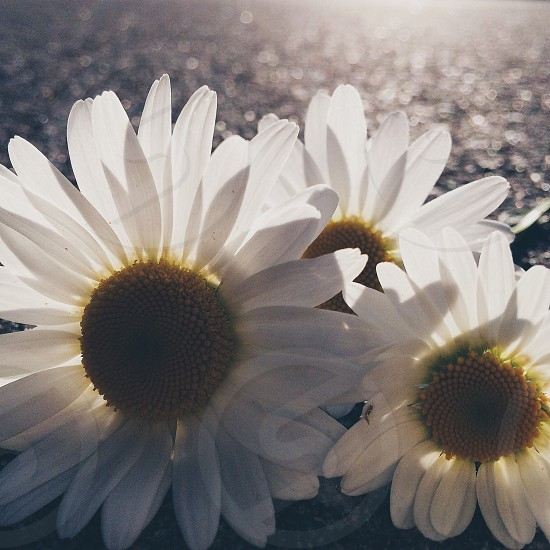 white petal flower photo