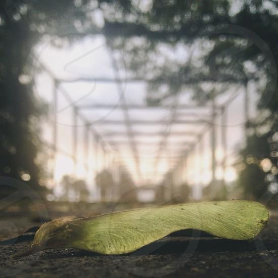 large green leaf photo