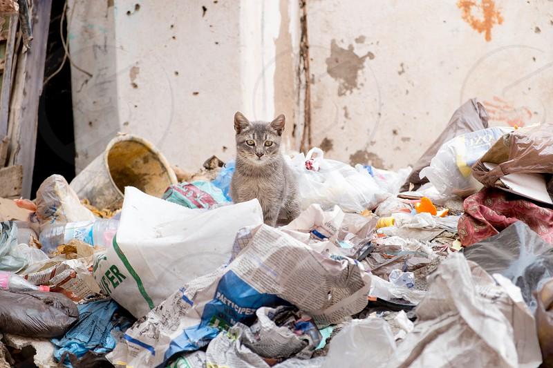 Trashkitten photo