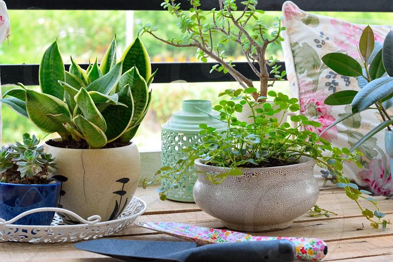 balcony gardening photo