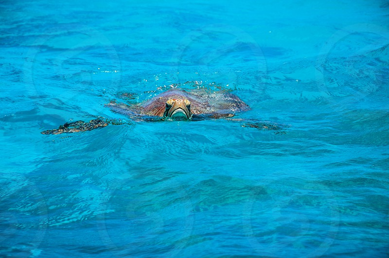 turtle on water photo