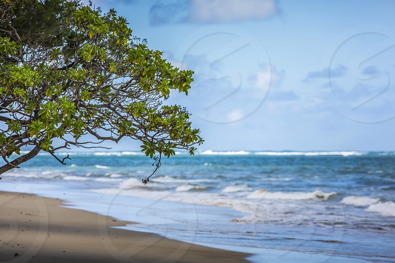 waves crashing on brown sandy beach shore with green tree under blue sky photo