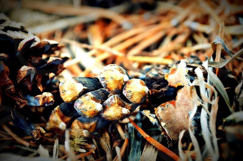 pinecones on ground photography photo