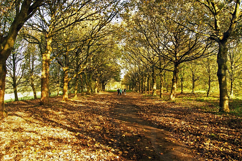 UK England. Rivington. The pathway and it's canopy of trees in their autumn colours. The path leads down from the castle folly to the Bottom Barn. photo