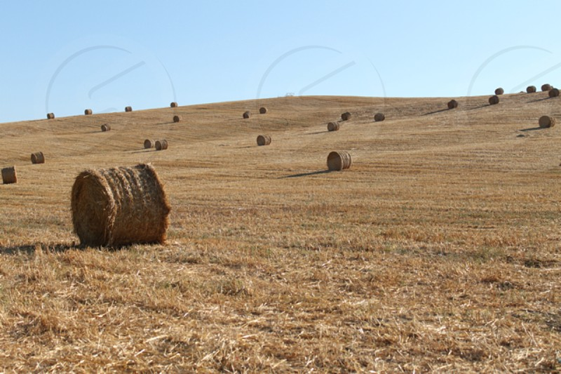round bale hay photo