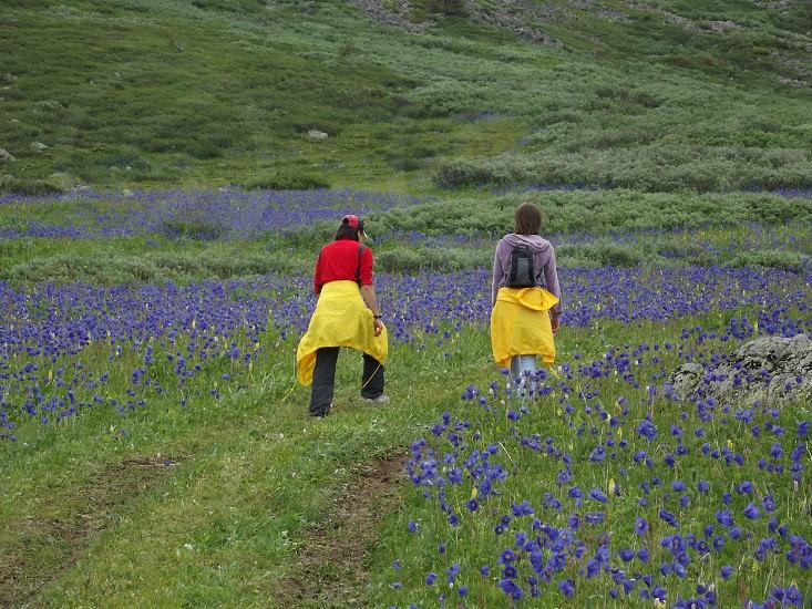 #spring #blossom #mountains #altai photo