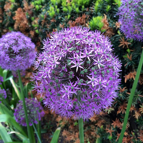 Fancy flowers photo