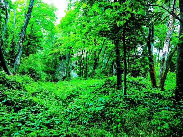 green tree near lake photo