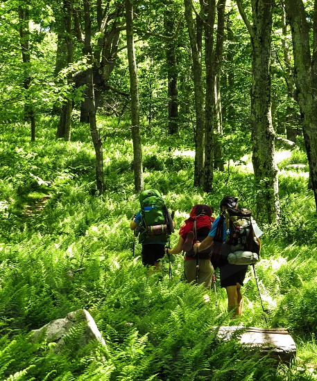 Hiking trail backpacking ferns forest nature camping lifestyle outside trekking photo