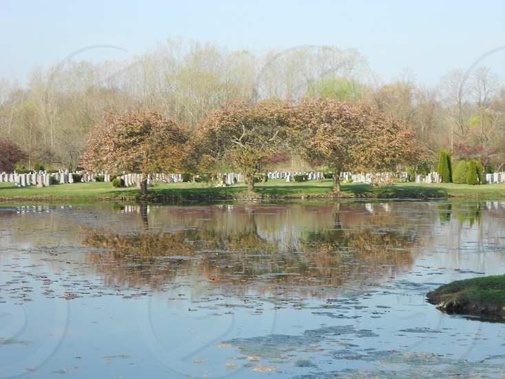 Trees in the spring reflecting on a pond photo