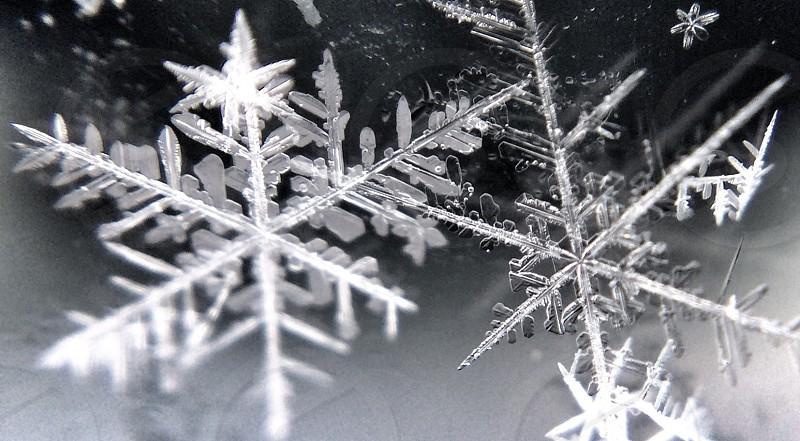 white snow flake photo