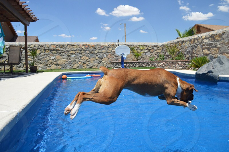 Boxer jumping about to make a splash dog jumping photo
