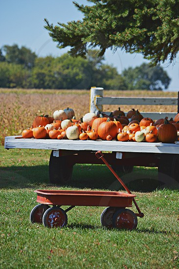 Old Fashion Local Pumpkin Farm. Little red wagon and a flatbed full of pumpkins of all shapes and sizes and colors. photo