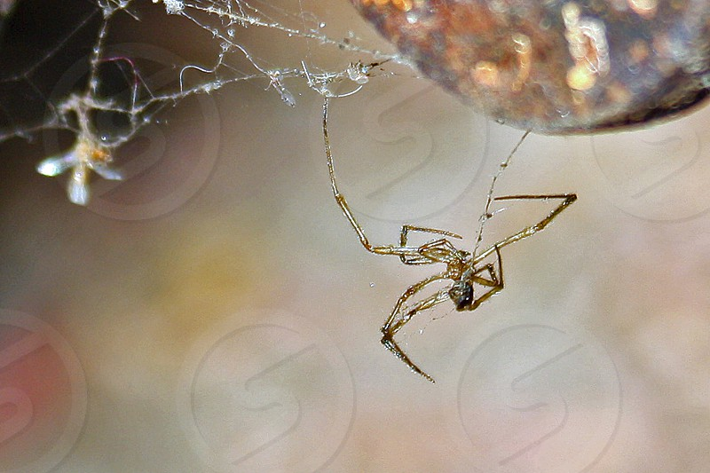 Macro of spider hanging from its web photo