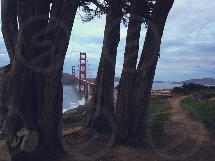 view of golden gate bridge from path with trees photo