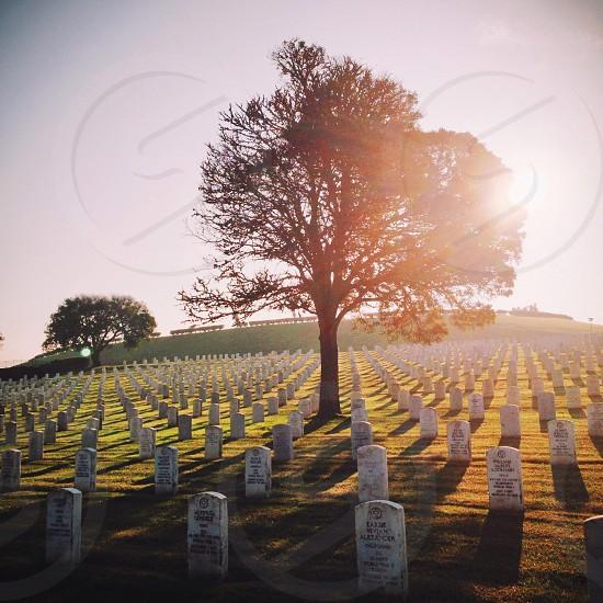 graveyard field photo