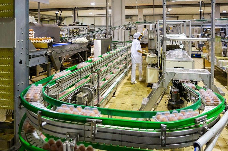 Egg processing plant near Bergamo in Italy photo