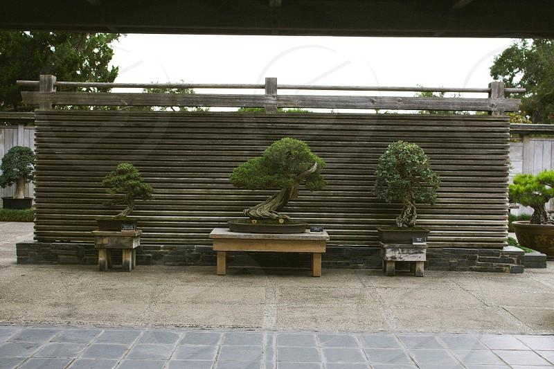potted green bonsai photo
