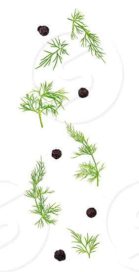 Isolated flying spices. Falling fresh dill herb and black pepper grains on white background with clipping path as package design element and advertising. photo