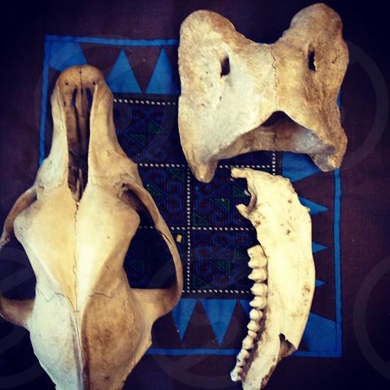 white bones photo