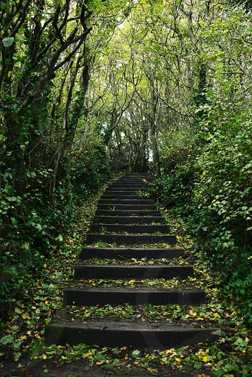 wooden steps down through tree lined path photo