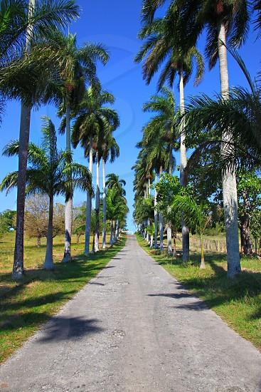 pathway alongside trees photo