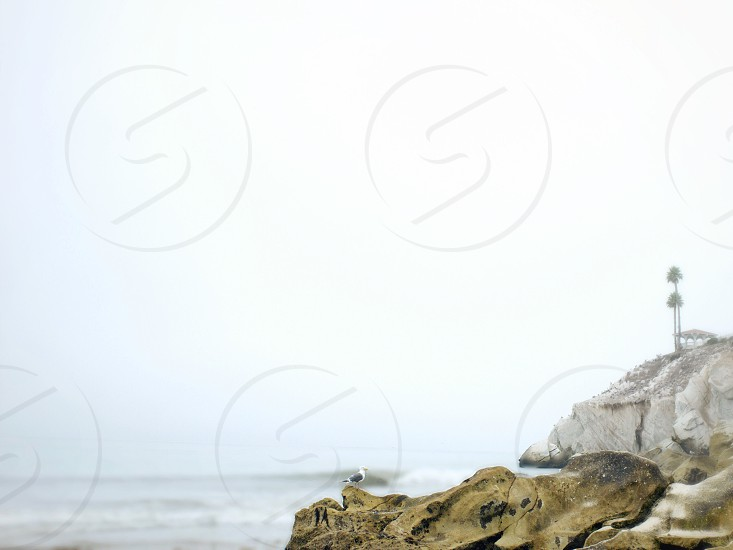 Seagull and rocks on the coast.  photo