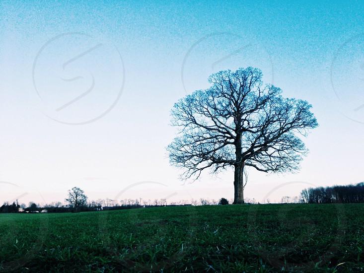 brown tree on green grass field photo