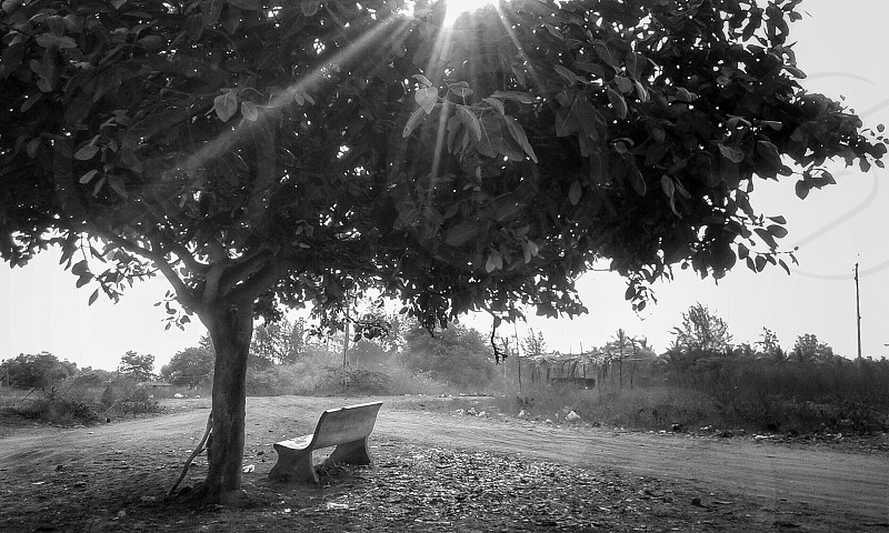 The bench... photo